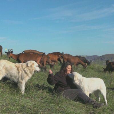 Puntata 78 – Michelle Sartori e le sue capre